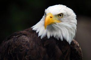 EAGLE !