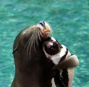 unusual-animal-friends-9