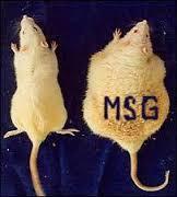 MSG RAT