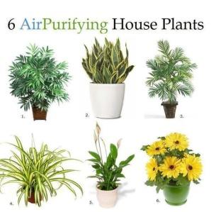pur plants .