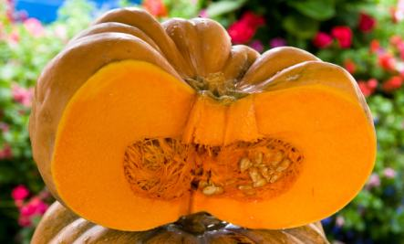 cated pumpkin