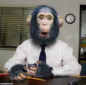 Monkey-Business-78549