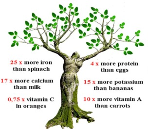moringa-oleifera-powder-as-food