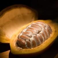 kakao-%cf%83%cf%80%ce%bf%cf%81%ce%bf%ce%b9