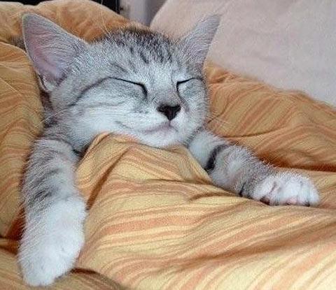 slep cat 1