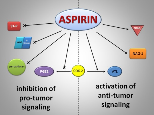 ASPIRIN-biology