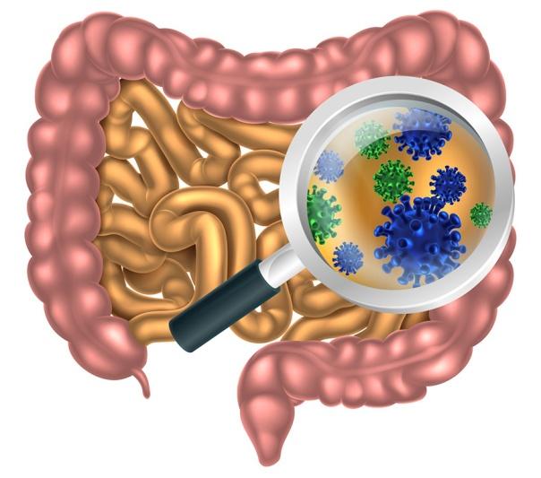 microbiota-intestinal