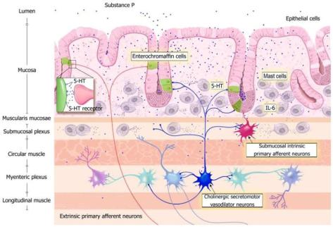 neuroendocrine-system-of-gut