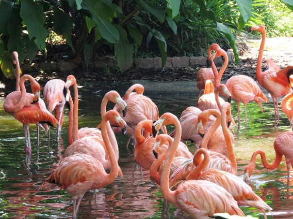 flamingo-2458782_960_720